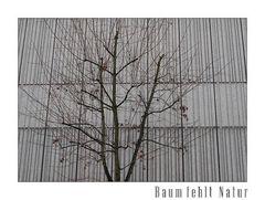 Baum fehlt Natur