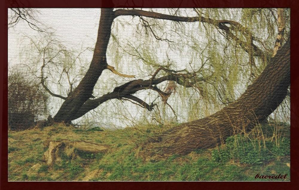 # Baum-gefallen #