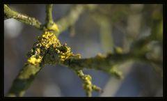 Baum-Geschwür