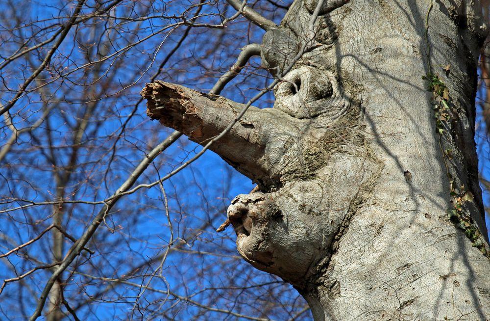 Baum-Gesicht