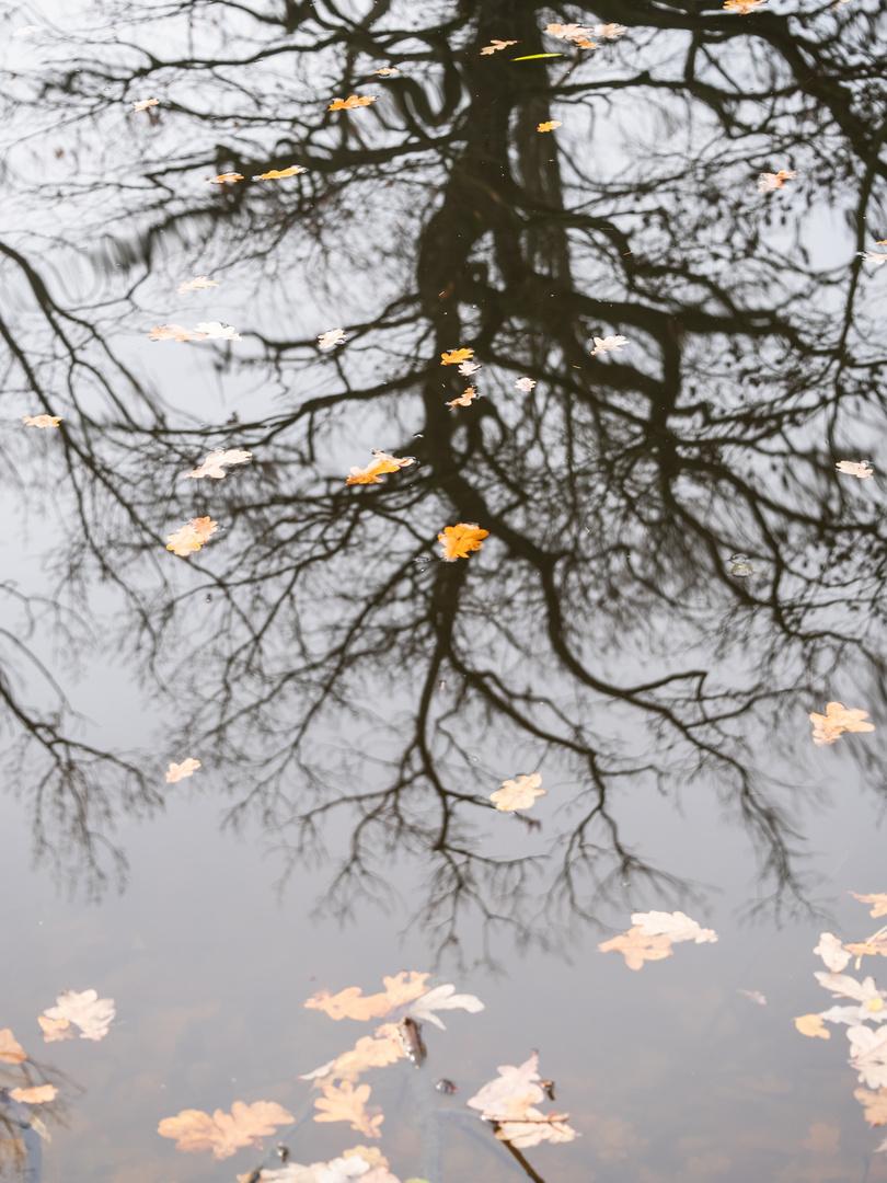 Baum gespiegelt