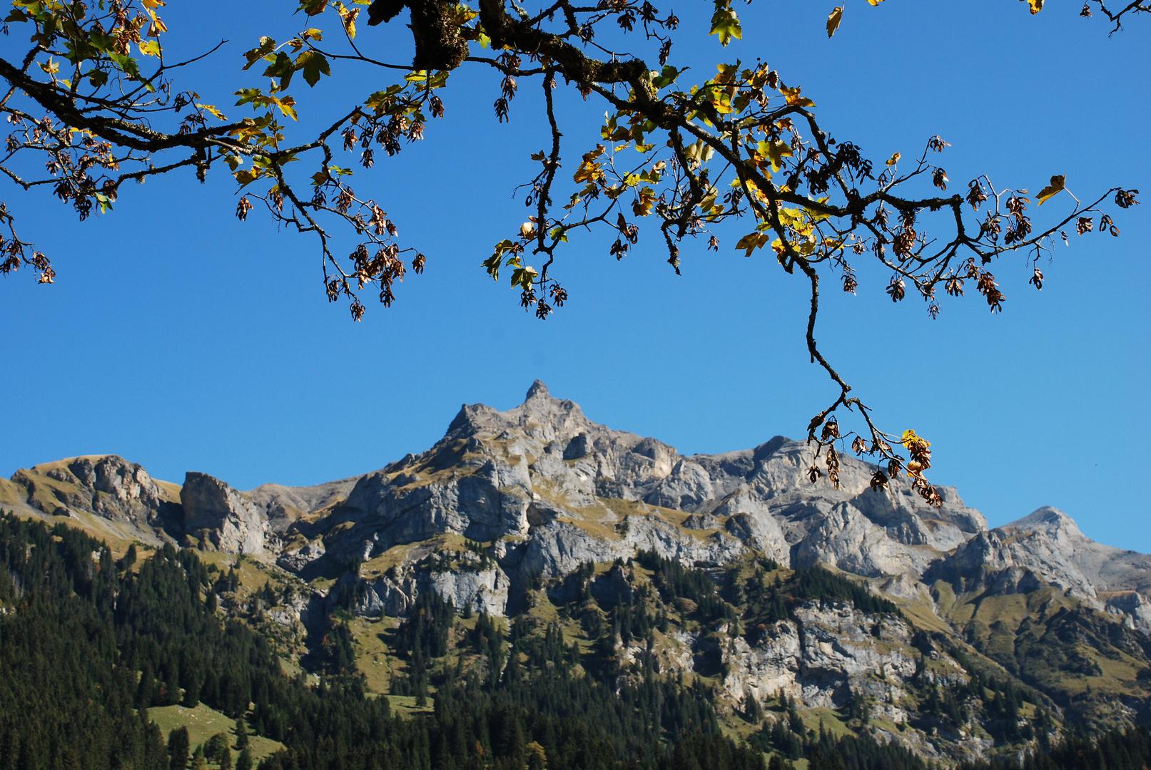 Baum grüsst Berg