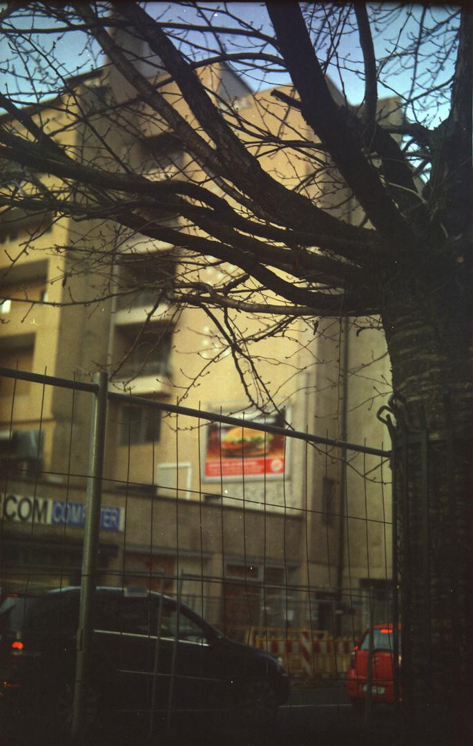 Baum, Haus und Burger