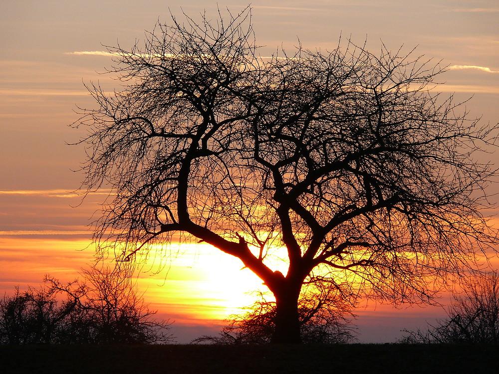 Baum im Abendhimmel