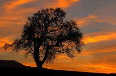 Baum im Abendlicht