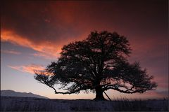 ~ Baum im Abendrot IV ~