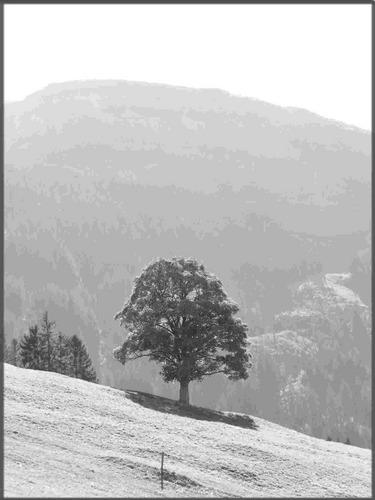 Baum im Appenzellerland2