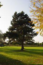 Baum im APX