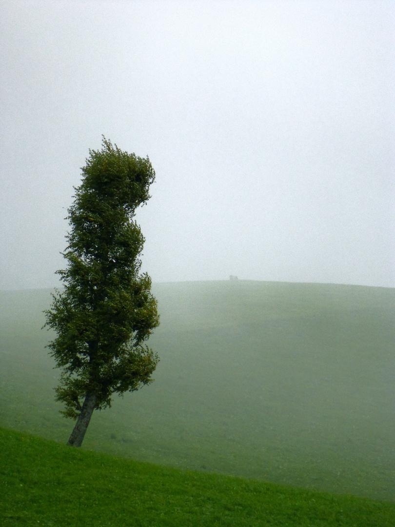 Baum im Bergnebel