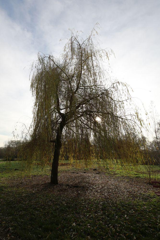 Baum im Dezember