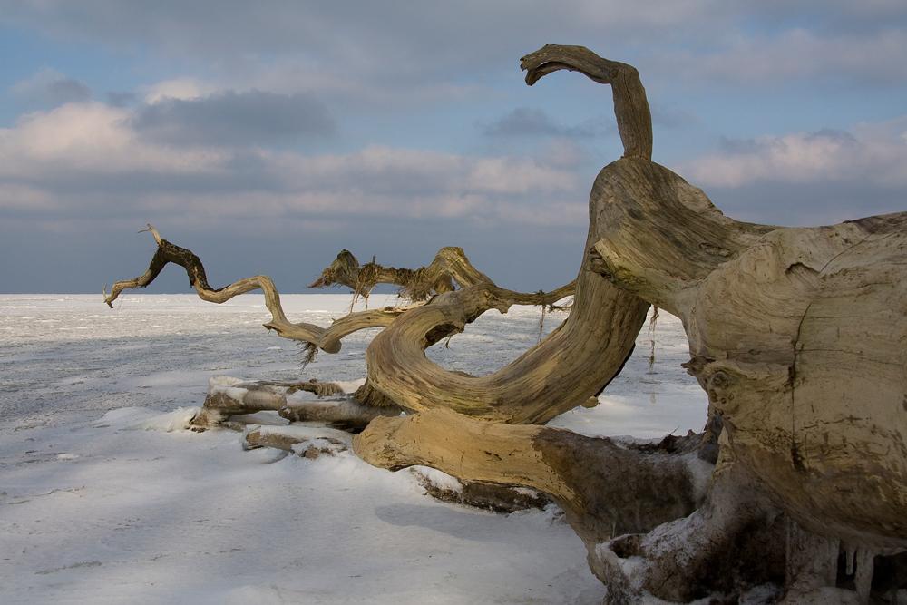 Baum im Eis