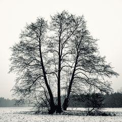 Baum im Febraur mit Scnee