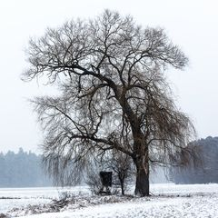 Baum im Febraur mit Scnee II