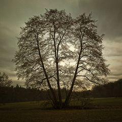 Baum im Februar