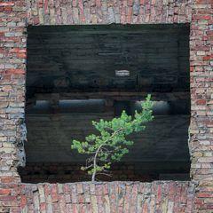 Baum im Fenster