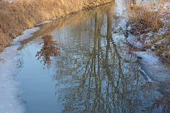 Baum im Fluss