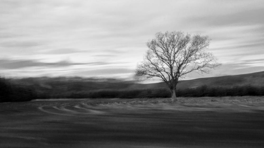 Baum im Frühjahr