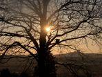 Baum im Gegenlicht...