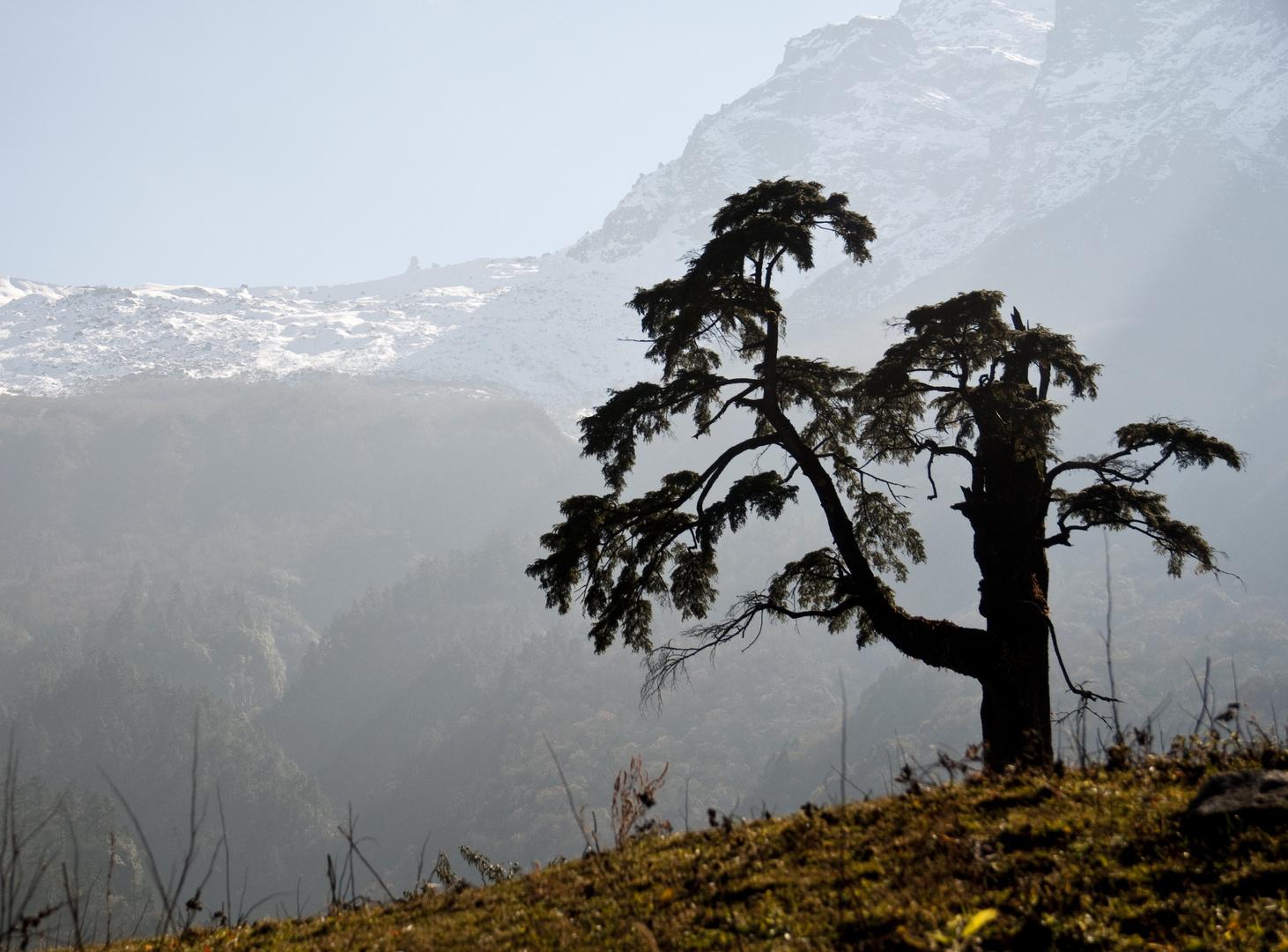 Baum im Himalaya