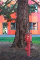 Baum im Hof teilweise verdeckt von einem Hydranten