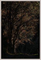 Baum im Licht