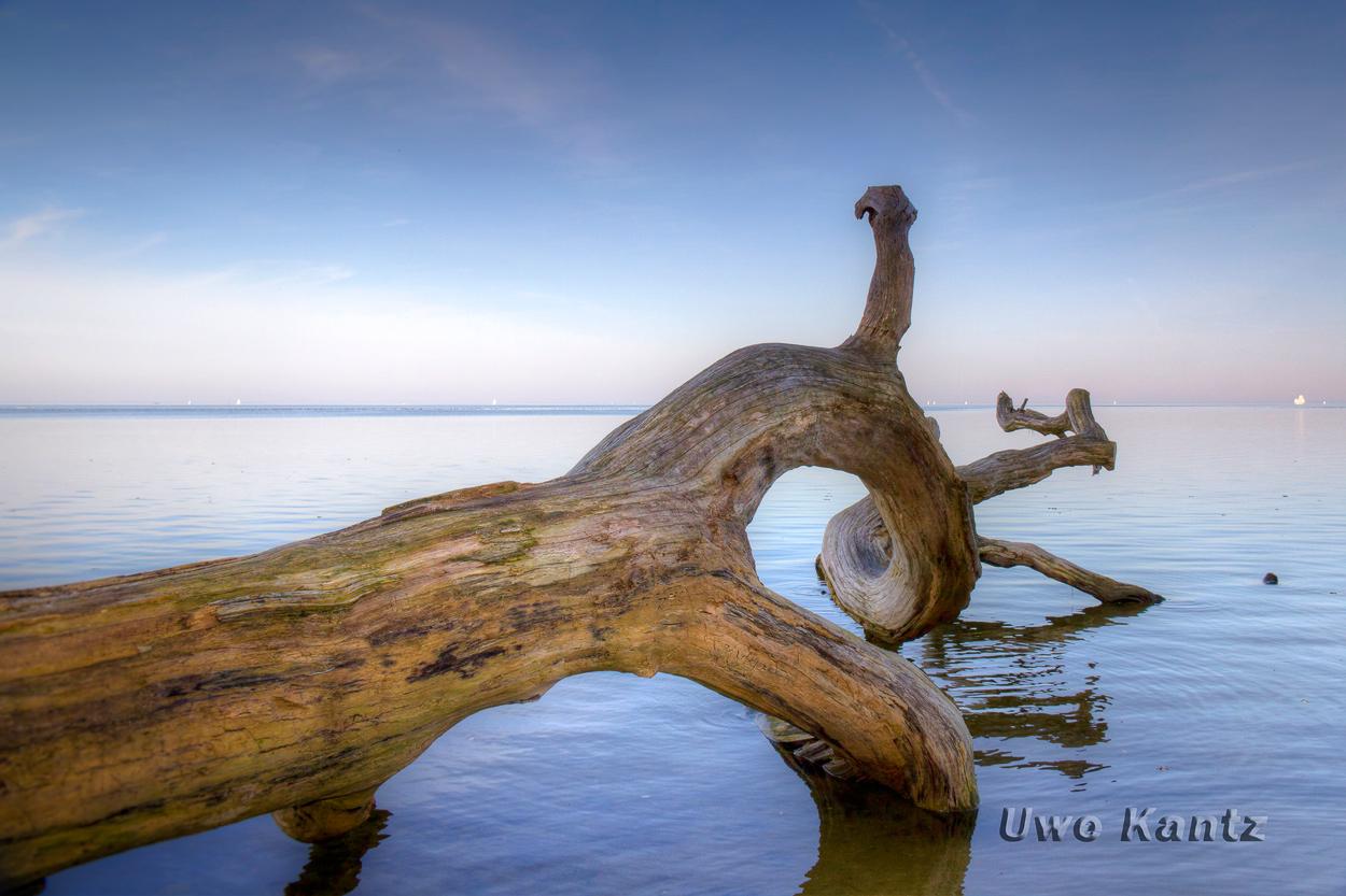 Baum im Meer