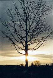 Baum im Morgengelb