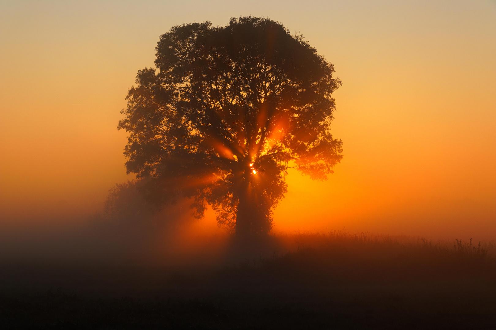 Baum im Nebel und Sonnenaufgang
