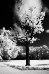 Baum im Neuen Garten