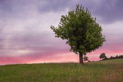 Baum im Odenwald