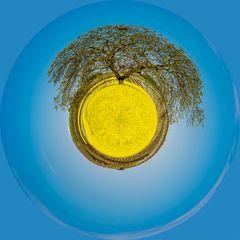 Baum im Rapsfeld-Little Planet
