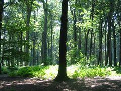Baum im Schatten