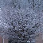 Baum im Schnee.....