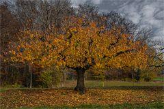 Baum im Spätherbst