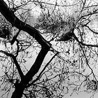 Baum im Spiegel