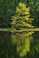 Baum im Teich