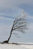 Baum im Winde