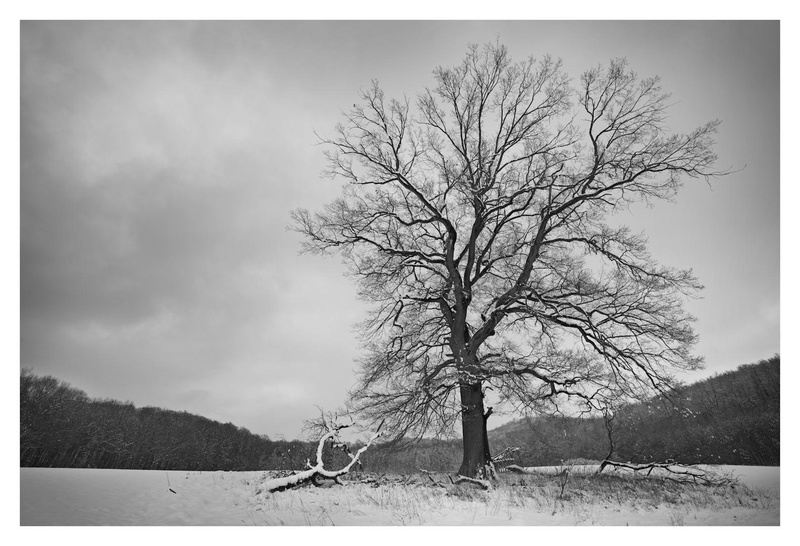 - Baum im Winter -