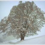 """""""Baum im Winter."""""""