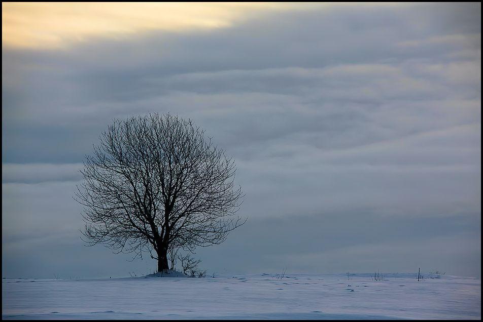 baum im winter...