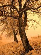 Baum im Winter (Mühlviertel)