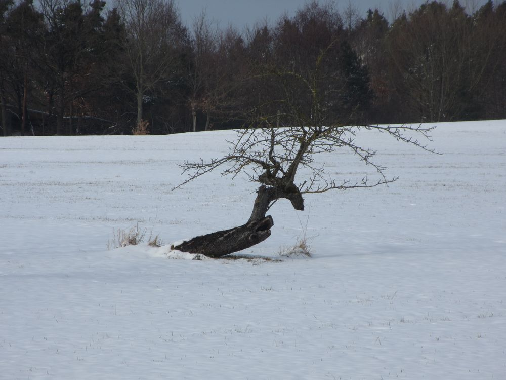 Baum im Wintersturm