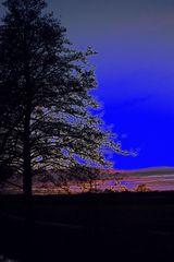 Baum in der Abendstimmung - mit Variationen - Bea 1