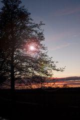 Baum in der Abendstimmung - mit Variationen - Bea 2