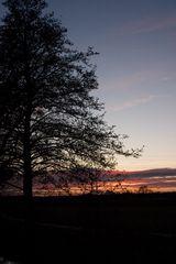 Baum in der Abendstimmung - mit Variationen - original