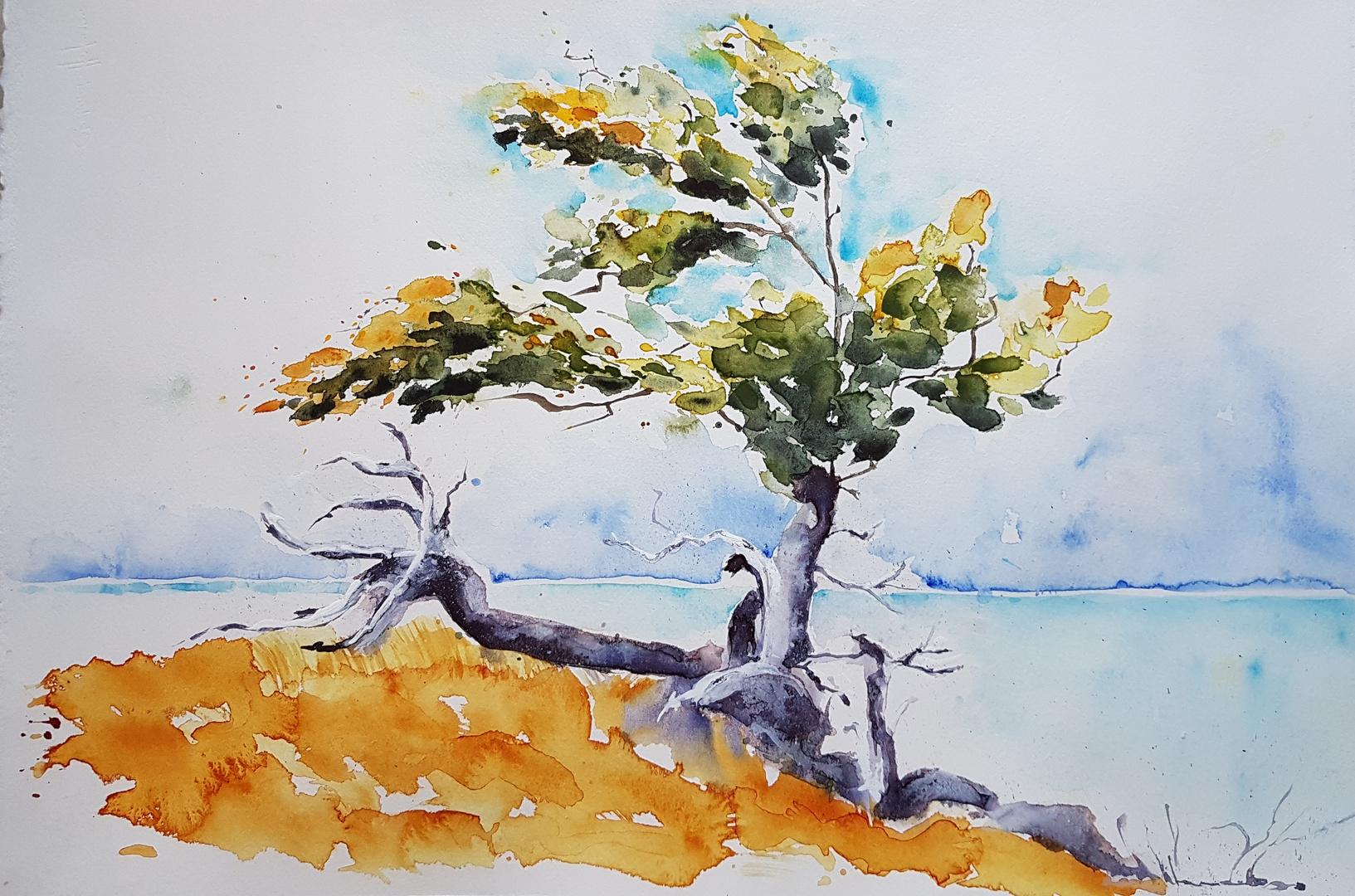 Baum in der Karibik