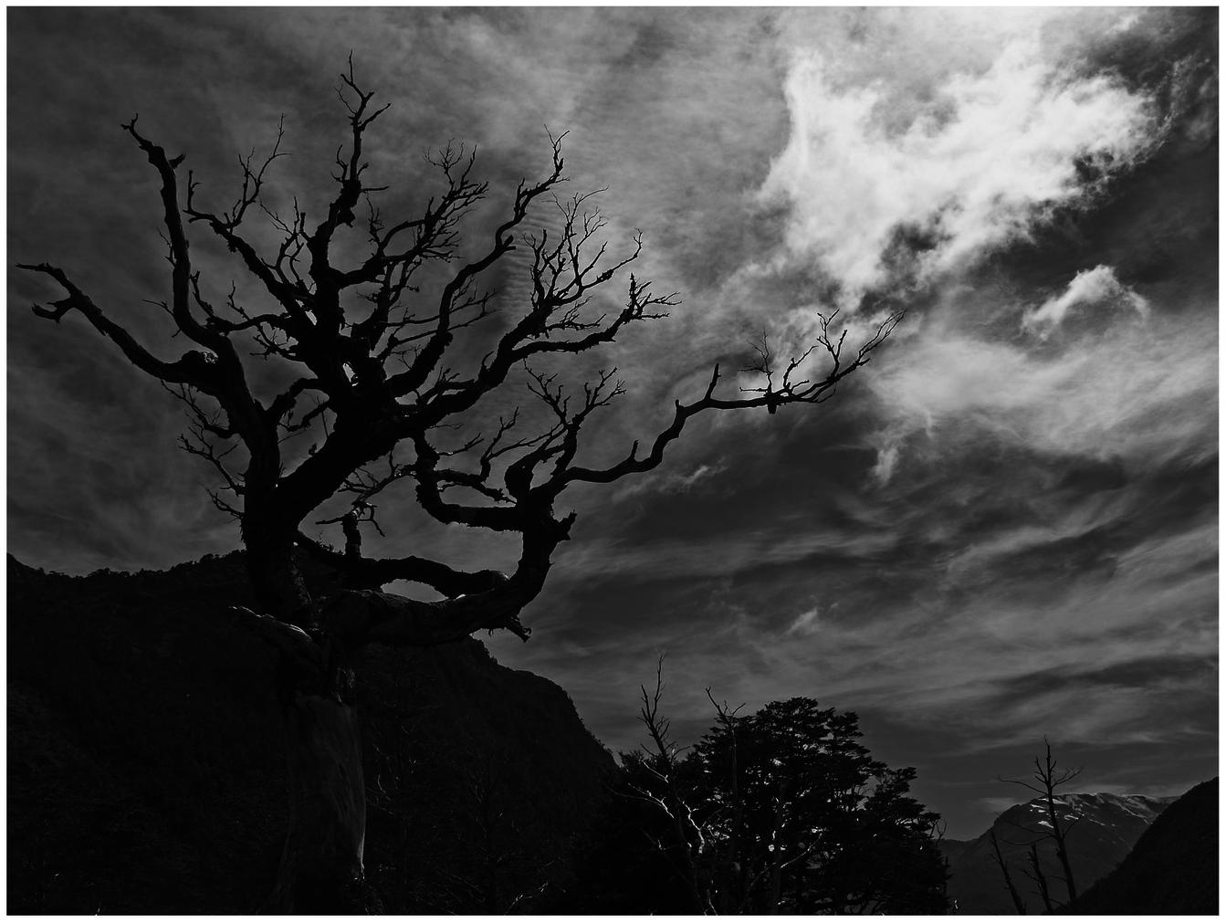 Baum in der Landschaft ...