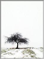 Baum in der Landschaft/18.01.2002