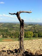 Baum in der Toskana