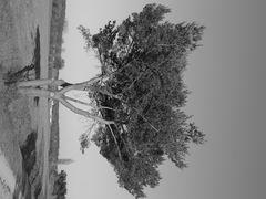 Baum in Einsamkeit